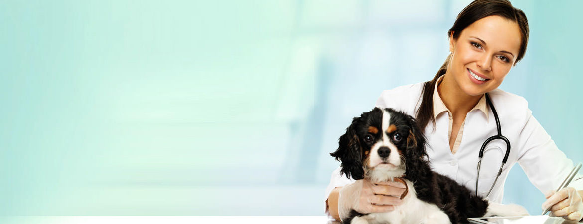 Advertise your products and services to the UK's largest online veterinary communities.